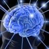 Cerebro humano es capaz de anticipar lo que verá, demuestra estudio