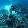 Contaminación invade los sitios más profundos del planeta