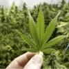 Bomberos acuden a un incendio y encuentran 170 libras marihuana