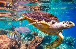 Los océanos están bajo una amenza sin precedentes, alerta ONU